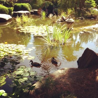 Ducks in Japanese pond ZoeAtHome.com